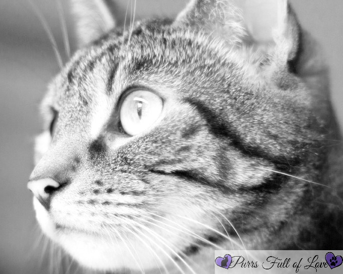 black and white cat photography