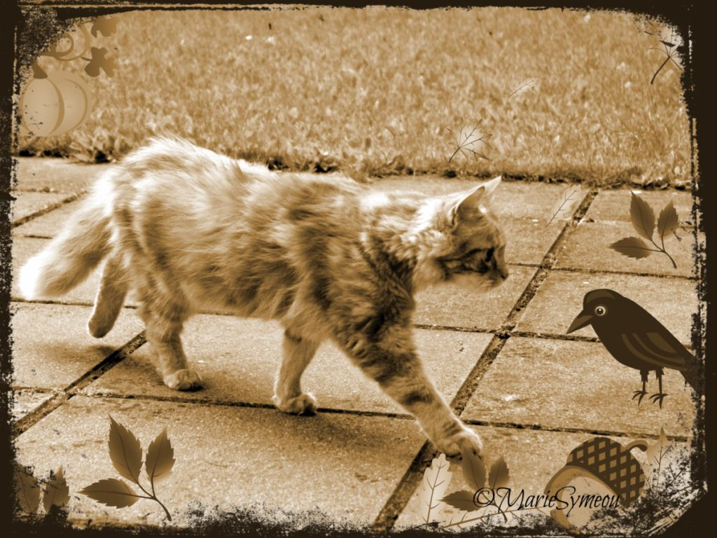 caturday art ginger tabby walking in sepia autumn