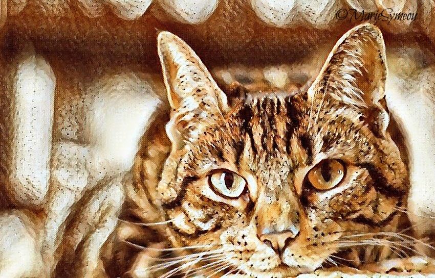 Coffee Effect Caturday Art